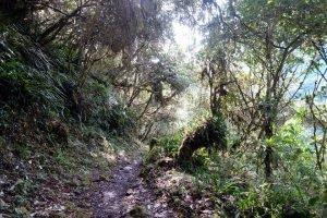 Trek au coeur des Yungas boliviennes.