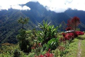 Tocaña, village afro-bolivien au coeur des Yungas.