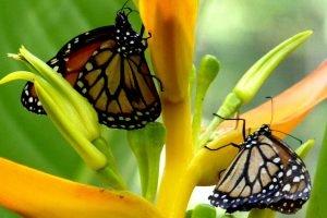 Papillons au Parc Amboro.